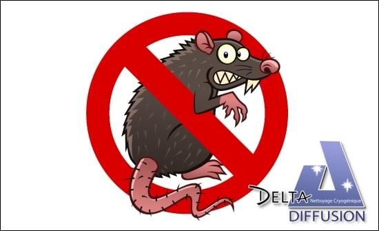 Destruction des nuisibles (rats) avec la carboglace